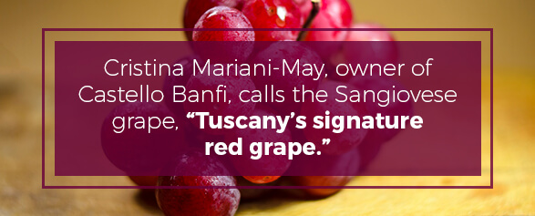 The Sangiovese Grape is Tuscany's signature red grape