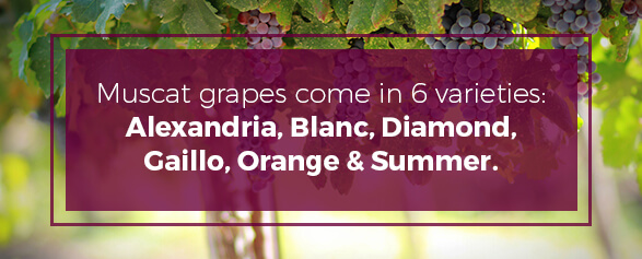Muscat grapes come in 6 varieties Alexandria, Blanc, Diamond, Gaillo, Orange and Summer