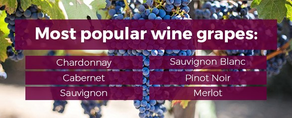 The most popular wine grapes are: Chardonnay, Cabernet, Sauvignon, Sauvignon Blanc, Pinot Noir, and Merlot.