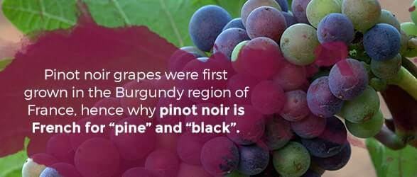 """Pinot Noir grapes were first grown in the Burgundy region of France, hence why pinot noir is French for """"pine"""" and """"black."""""""