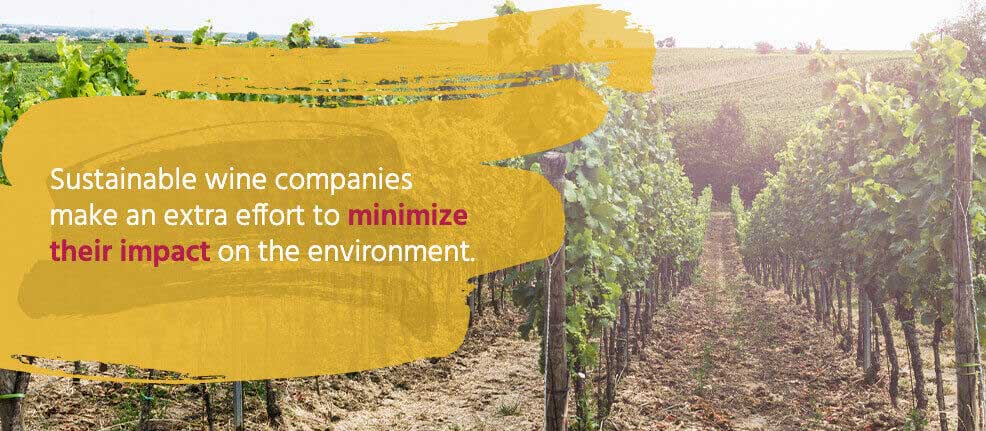 Sustainable wine companies make an extra effort to minimize their impact on the environment.
