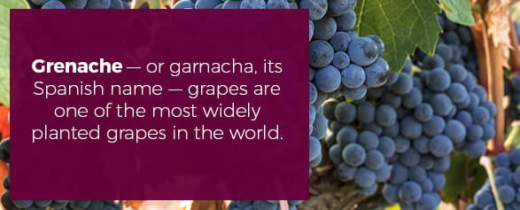 Grenache — or garnacha, its Spanish name — grapes are one of the most widely planted grapes in the world.