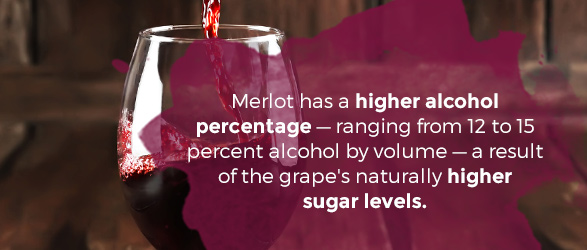 Merlot has a higher alcohol percentage — ranging from 12 to 15 percent alcohol by volume — a result of the grape's naturally higher sugar levels