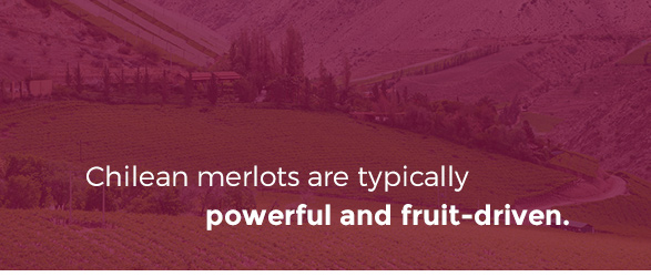 Chilean Merlots are typically powerful and fruit-driven.