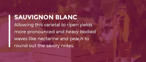 Sauvignon Blanc - Allowing this varietal to ripen yields more pronounced and heavy-bodied waves like nectarine and peach to round out the savory notes.