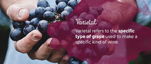 Varietal refers to the specific type of grape used to make a specific kind of wine.