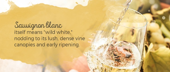 """Sauvignon blanc itself means """"wild white,"""" nodding to its lush, dense vine canopies and early ripening."""