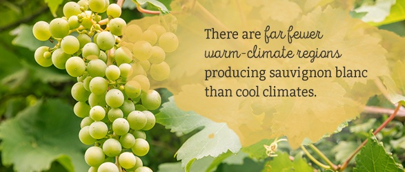 There are far fewer warm-climate regions producing sauvignon blanc than cool climates.