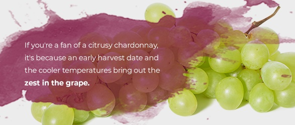 If you're a fan of a citrusy chardonnay, it's because an early harvest date and the cooler temperatures bring out the zest in the grape.