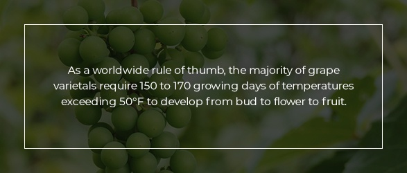 As a worldwide rule of thumb, the majority of grape varietals require 150 to 170 growing days of temperatures exceeding 50°F to develop from bud to flower to fruit.